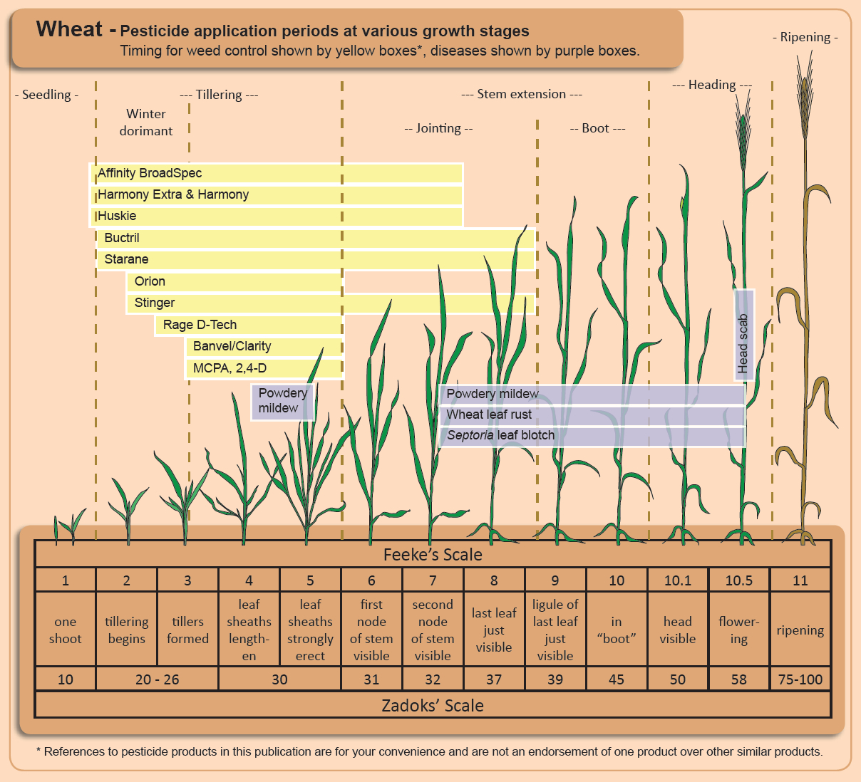 Using Fungicides on Wheat – Integrated Pest and Crop