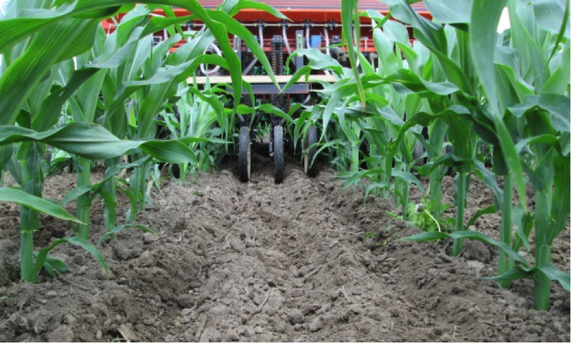 Figure 2. Interseeding (drilling) of cover crops on July 14, 2014.