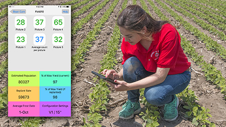 BeanCam – Soybean Replant – Integrated Pest and Crop