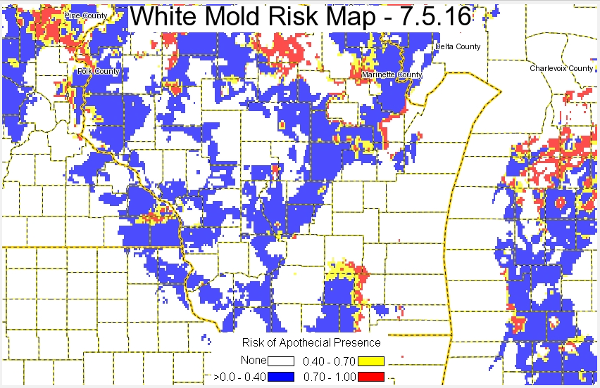 White Mold Risk 7:5