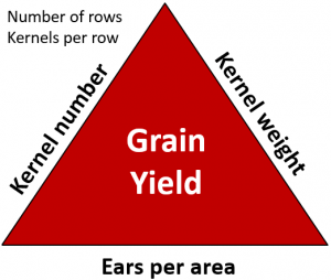 Figure 1.Yield Components of Corn.