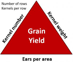 Figure 1.Yield Components of Corn.