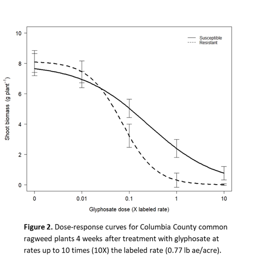 Glyphosate Resistance Confirmed in Common Ragweed from
